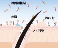 ①界面活性剤が皮脂や汚れなどに付着
