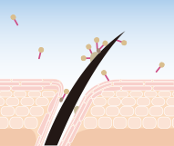 ③汚れが大きな塊となり、皮膚や髪に再付着する
