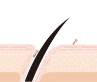④界面活性剤や汚れが皮膚や毛髪に残りづらくなる